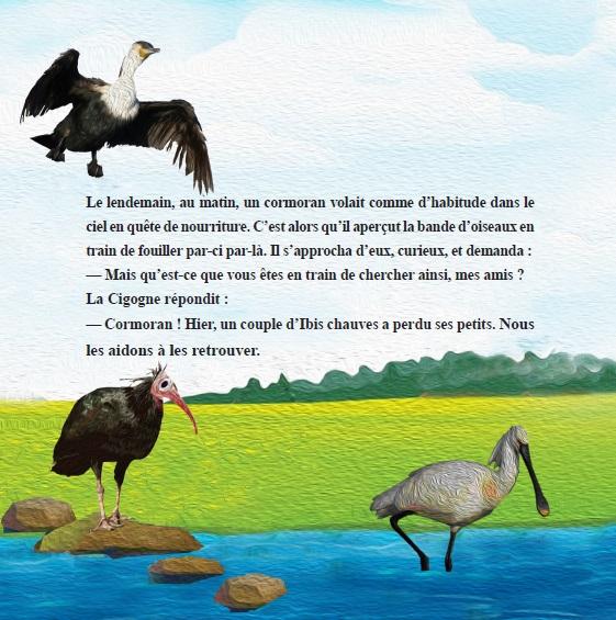Ibis chauve