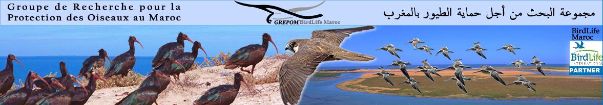 GREPOM/BirdLife Maroc